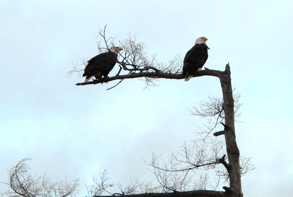 tw0 eagles